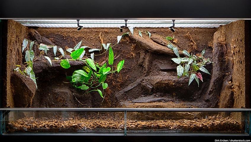 resin for terrarium